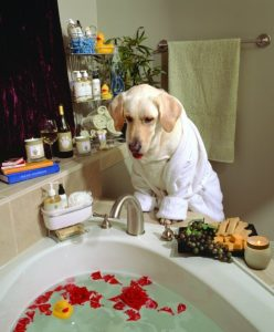 Dog in luxury bath tub