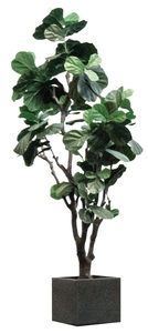 Artificial_Fiddle_Fig