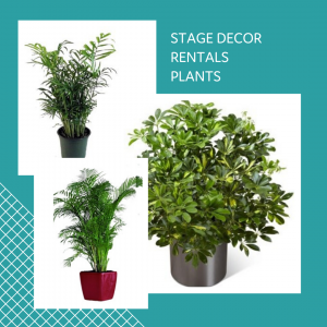 STAGE DECOR RENTALS PLANTS