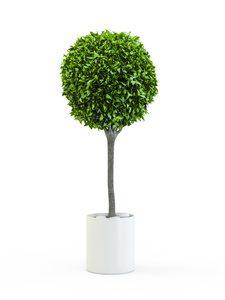 Topiary tree